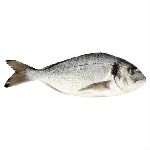 WHOLE SEA BREAM TSIPOURA